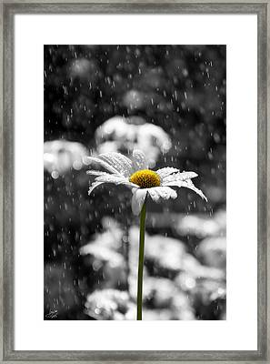 Sunny Disposition Despite Showers Framed Print