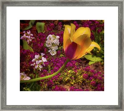 Sunny Disposition Framed Print by Jill Balsam