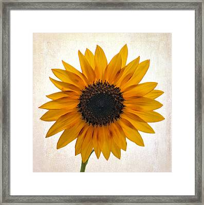 Sunny Disposition Framed Print by Tammy Espino