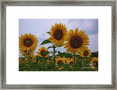 Framed Print featuring the photograph Sunny Faces by Debra Fedchin