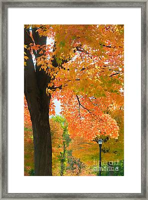 Sunny Fall Day By David Lawrence Framed Print