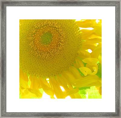 Sunny Flower Framed Print by Marcia Nichols