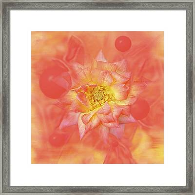 Sunny Flower Universe Framed Print by David Wise