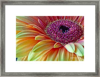 Sunny Gerber 2012 Framed Print by Art Barker