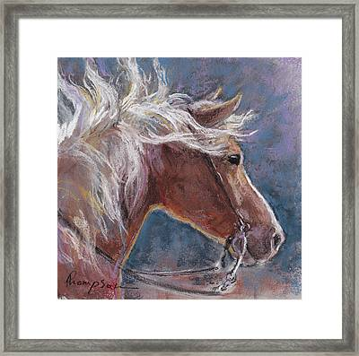 Sunny Haflinger Framed Print by Tracie Thompson