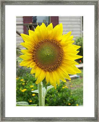 Framed Print featuring the photograph Bright Sunflower Happiness by Belinda Lee