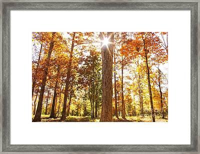 Sunny Hardwoods Framed Print