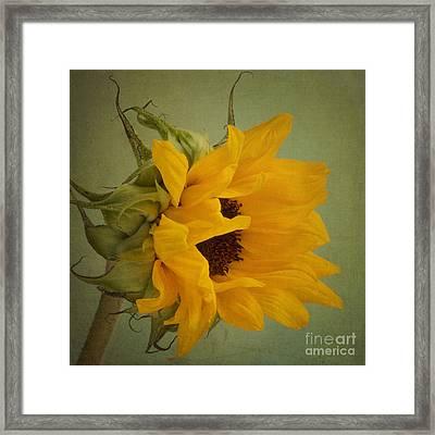 Sunny Framed Print by Jackie Schuknecht
