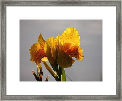 Sunny Lily Framed Print