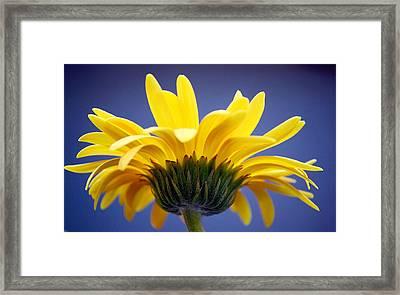 Sunny Love Framed Print by Melanie Moraga