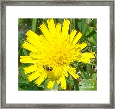 Framed Print featuring the photograph Sunny Lunch by Christina Verdgeline