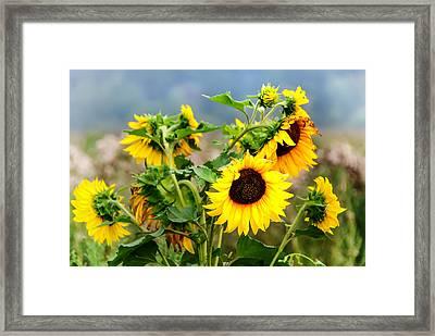 Sunny Meadow Framed Print by Jenny Rainbow