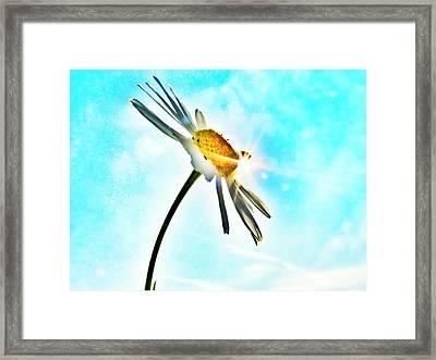 Sunny Morning Framed Print by Marianna Mills