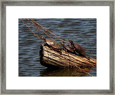 Sunny Painters Framed Print by Michael Caron