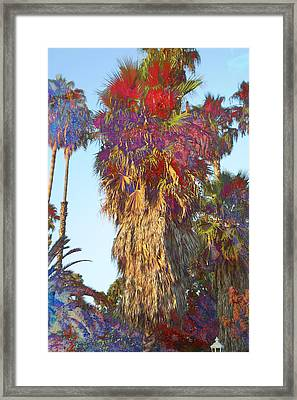 Sunny Palms Framed Print by John Fish