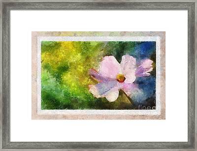 Sunny Pink Cosmos Framed Print