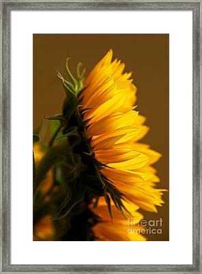 Sunny Profile Framed Print by Bob and Nancy Kendrick