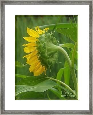Sunny Profile Framed Print by Sara  Raber
