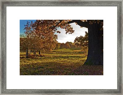 Sunny Richmond Autumn Framed Print by Maj Seda