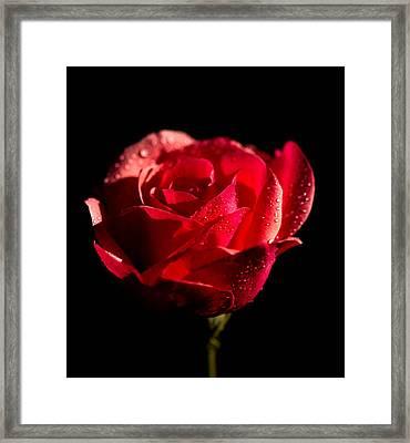 Sunny Rose Framed Print