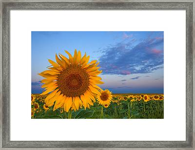 Sunny Side Up Framed Print by Darren  White
