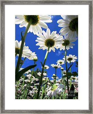 Sunny Side Up Framed Print by Pamela Clements