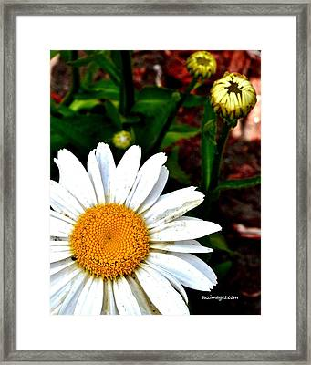 Sunny Side Up Framed Print
