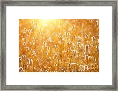 Sunny Spikes Framed Print
