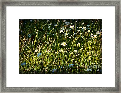 Framed Print featuring the photograph Sunny Spot by Mindy Bench