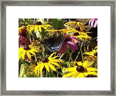 Sunny Spot Framed Print