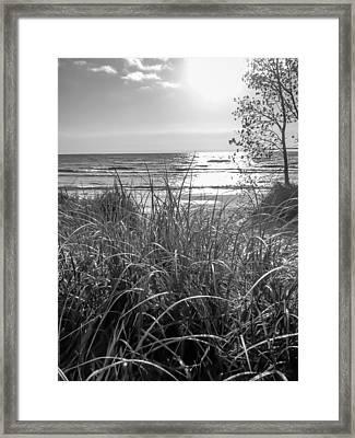 Sunny Sunday Framed Print
