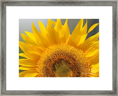 Framed Print featuring the photograph Sunny Sunflower by Olivia Hardwicke