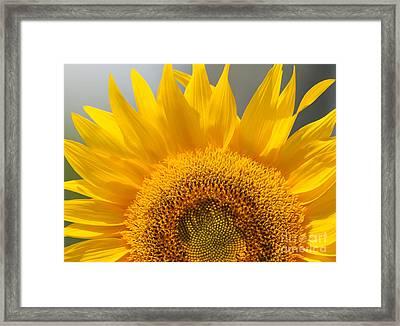 Sunny Sunflower Framed Print by Olivia Hardwicke