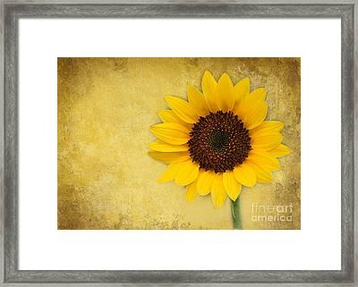 Sunny Sunflower Framed Print