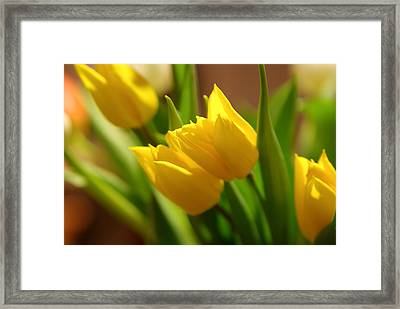 Framed Print featuring the photograph Sunny Tulips by Erin Kohlenberg