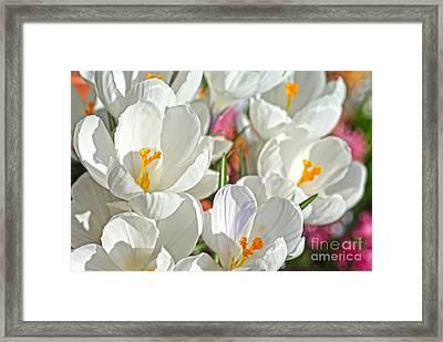 Sunny White Flowers Framed Print by Nur Roy