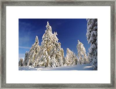 Sunny Winter Day Framed Print by Aged Pixel