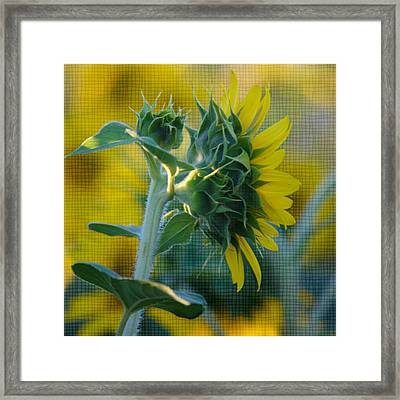 Sunny With Texture Framed Print by Rima Biswas