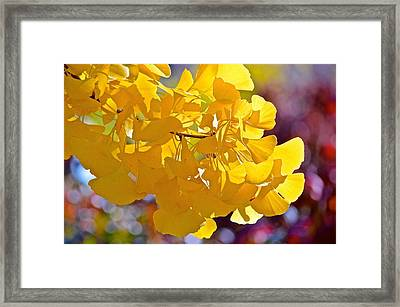 Sunny Yellow Ginkgo Framed Print by Rita Mueller