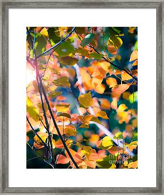 Sunny Yellow Leaves Framed Print