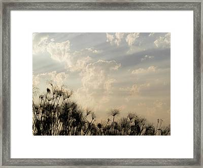 Sunrays Above Papyrus Plants, Okavango Framed Print