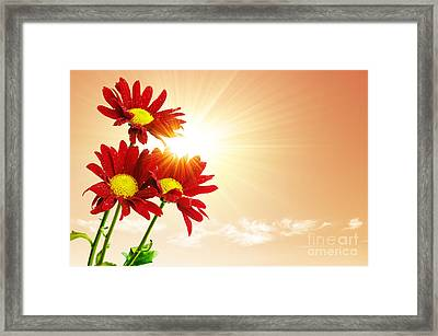 Sunrays Flowers Framed Print