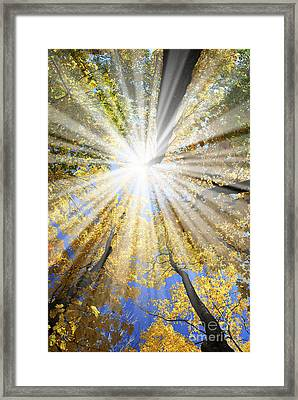 Sunrays In The Forest Framed Print