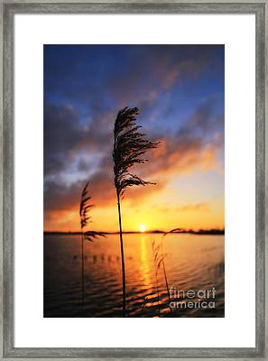 Sunrise @ The Lake Framed Print by LHJB Photography