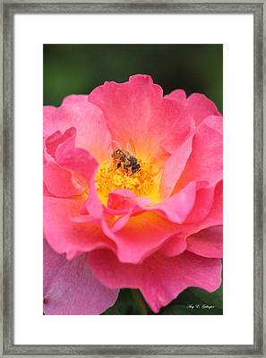 Framed Print featuring the photograph Sunrise by Amy Gallagher