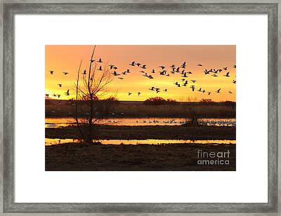 Framed Print featuring the photograph Sunrise And Geese by Ruth Jolly