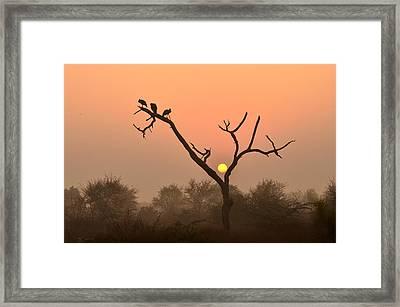 Sunrise At Bharatpur Framed Print