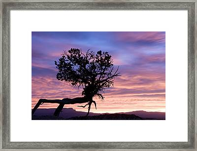 Sunrise At Bryce Canyon National Park Framed Print by Tom Norring