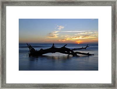 Sunrise At Driftwood Beach 7.2 Framed Print