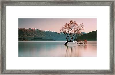 Sunrise At Lake Wanaka Framed Print by Steve Daggar Photography